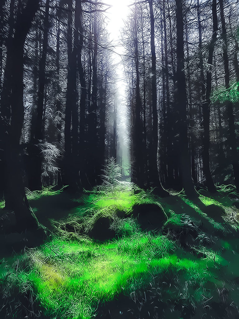 Ireland - Green Forest